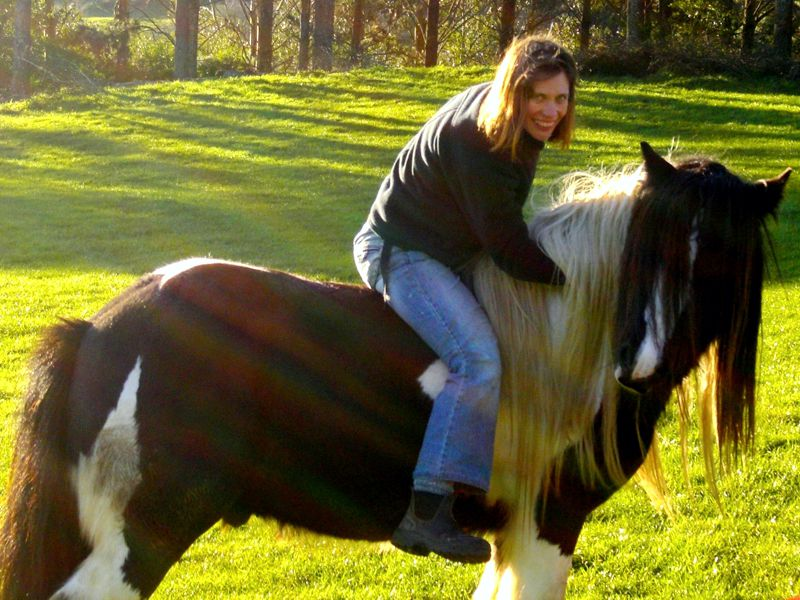 Gypsy Cob Horses for sale